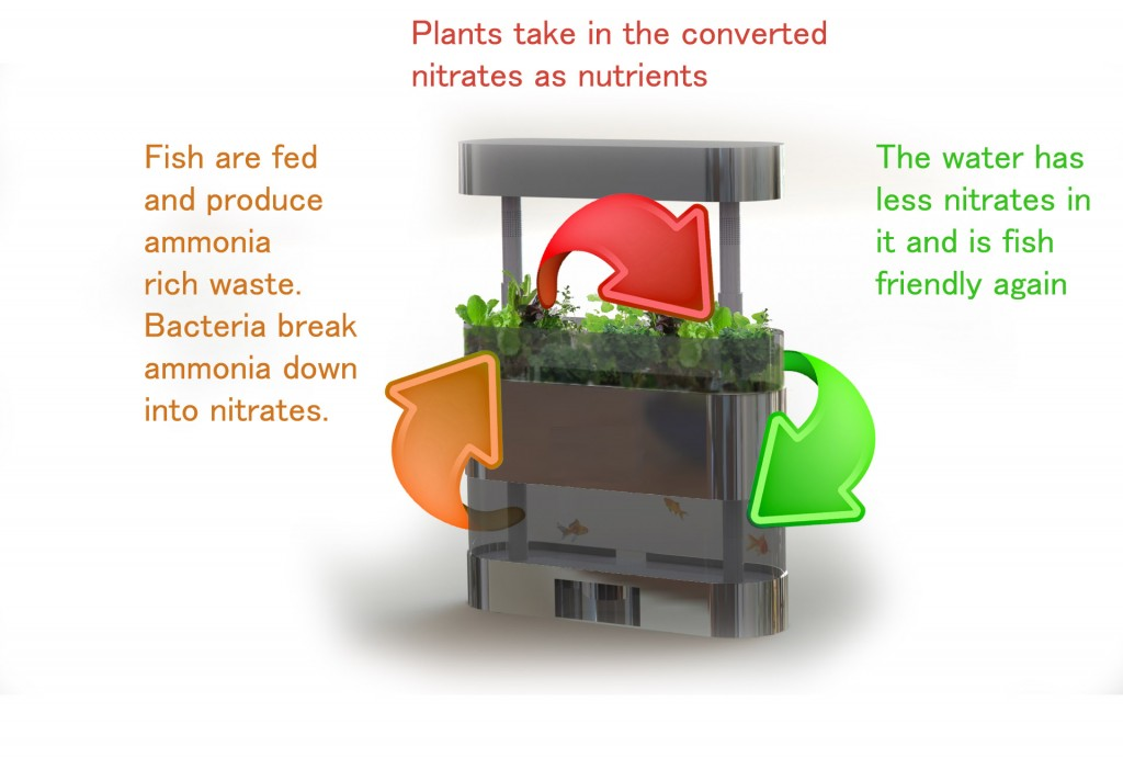 Aquaponics - nutrient cycle